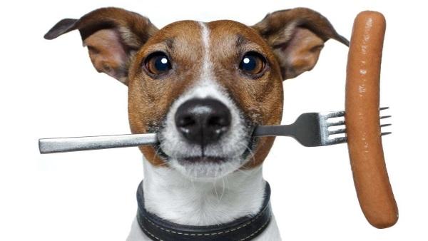 Безопасный и сбалансированный корм для собак – какой он?