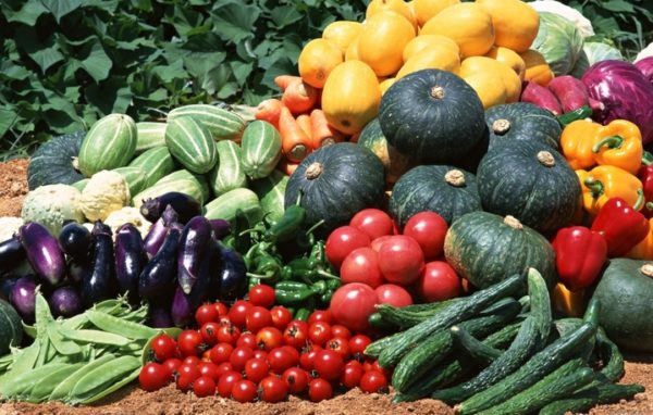 Переопыление семян овощных культур как основная проблема для огородников