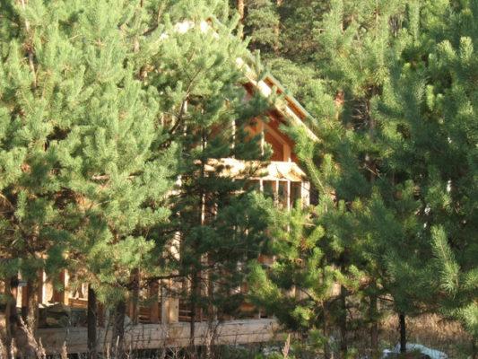 Какие преимущества дает покупка земельного участка возле леса